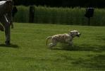 Junghunde 16.05.2009